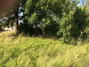 Grundstücke in Goppeln