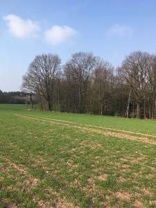 Grundstück in Freital